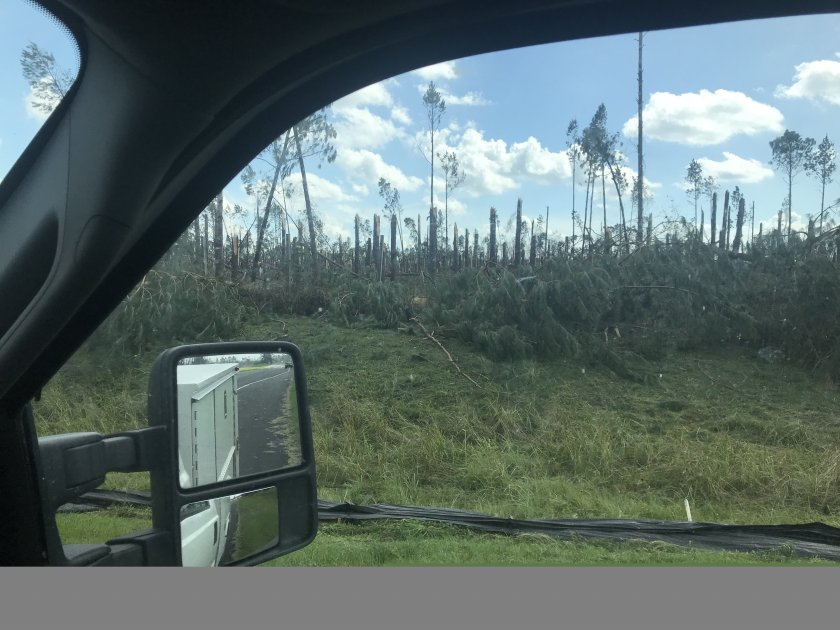 Trees I-10 after Michael